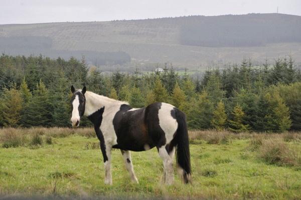 horse by trevmsklly