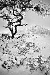 Winter Tree - Roseberry Topping
