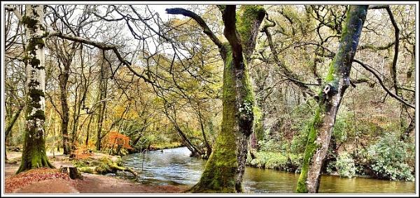 Respryn Woods. II Panorama. by rpba18205