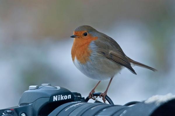 Robin a Nikon by skidzy