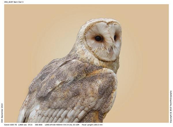 Barn Owl portrait by trev4