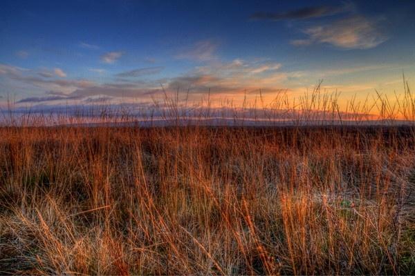 Through the Long Grass by Beladd