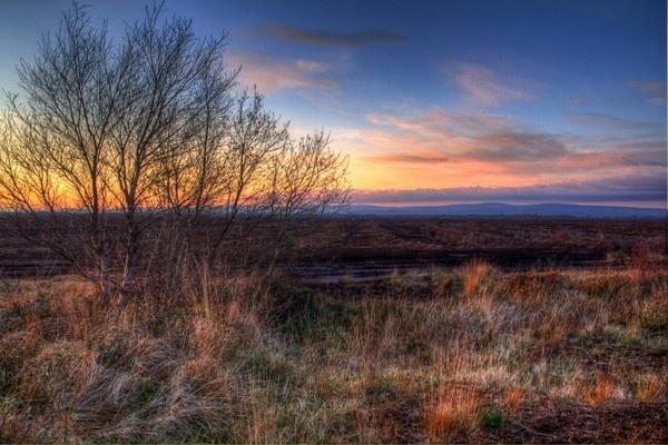 Irish Peat Bog by Beladd