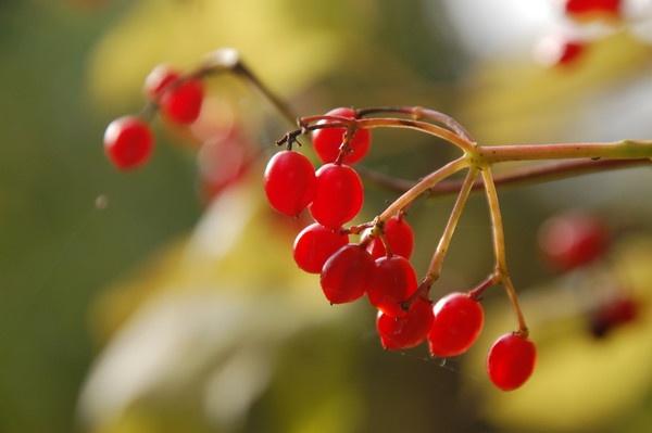 Autumn Fruit by af1960