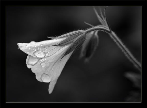 Mislaid flower by shush