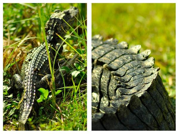 Reptile by robertojeda