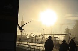 Fog in Oslo