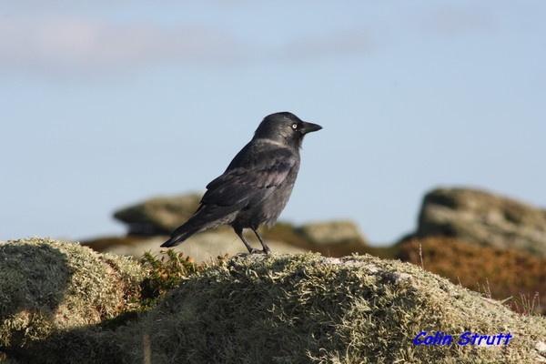 Bird in Lands End by coliniex