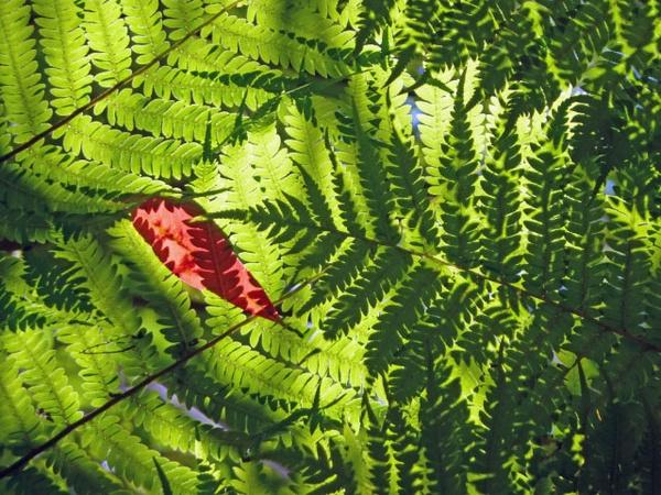 Tree ferns by mickrick