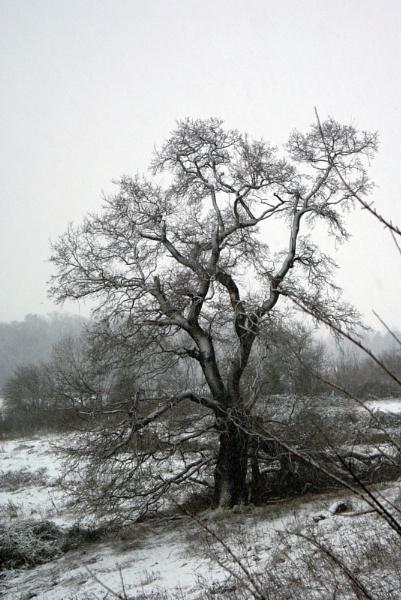 Bleak winter ahead? by jon gopsill
