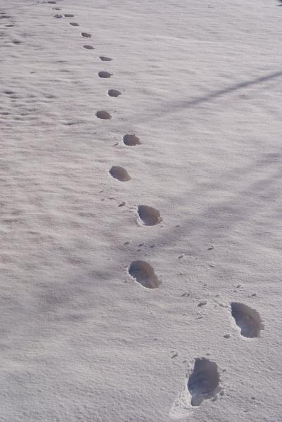 Footsteps by jon gopsill