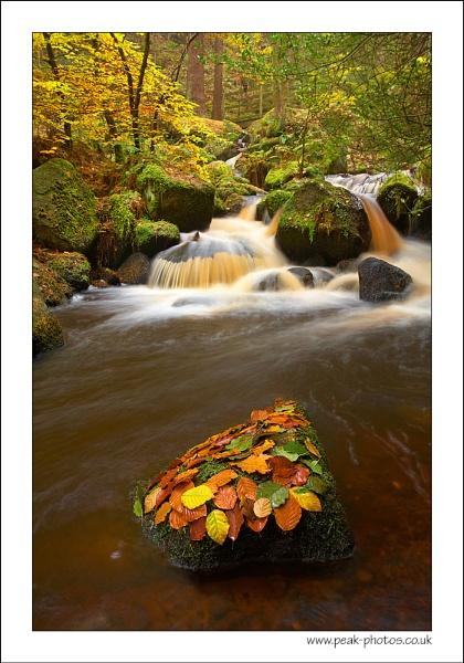 Autumn\'s end by richardwheel