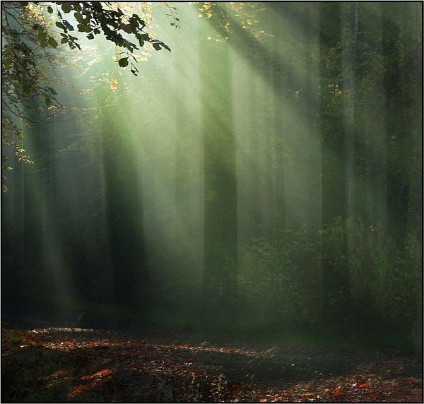 November Light by MalcolmM
