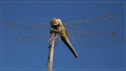 sky and dragonfly