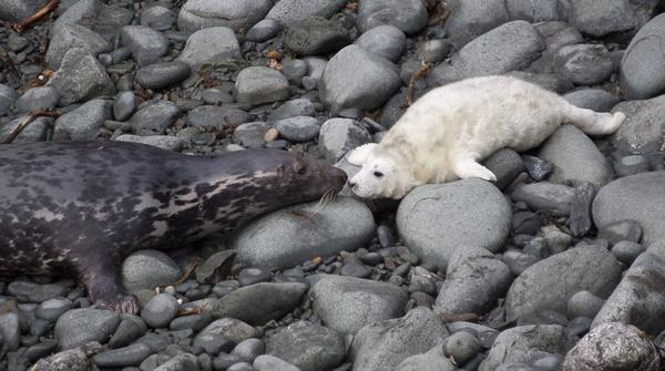 mum and cub by sheepdogshady