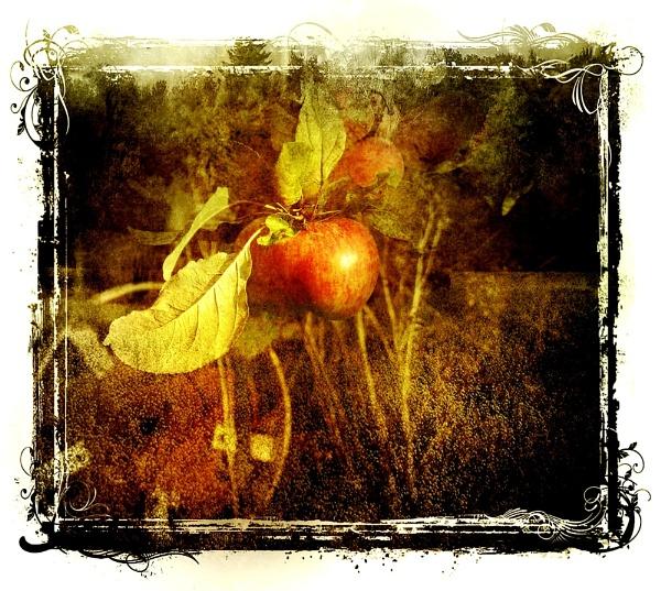 Red apples by helenlinda