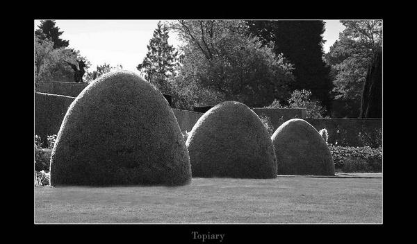 Topiary by Mynett