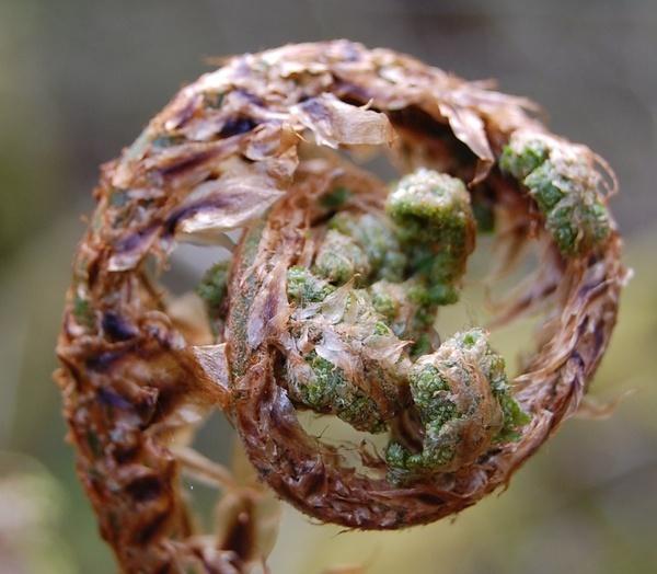 fern by MagdalenaS