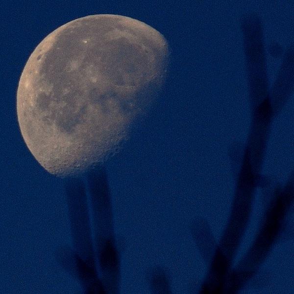 Leo Moon by fotoboy