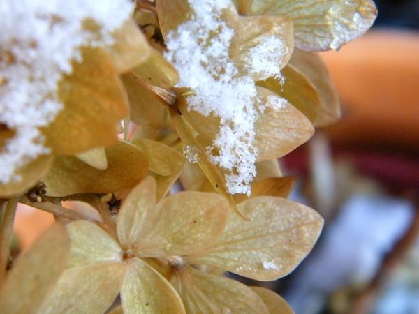 snow flower by Lizzie_x