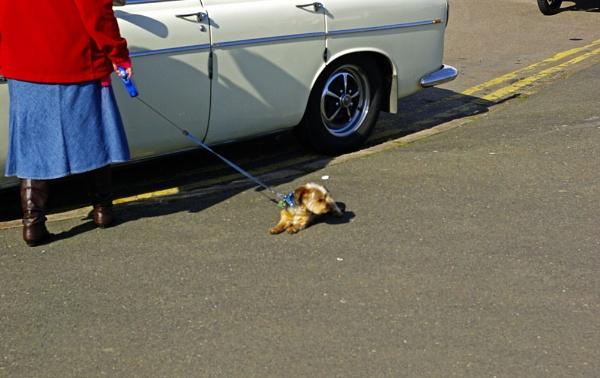 It\'s a dog\'s life by VivienO