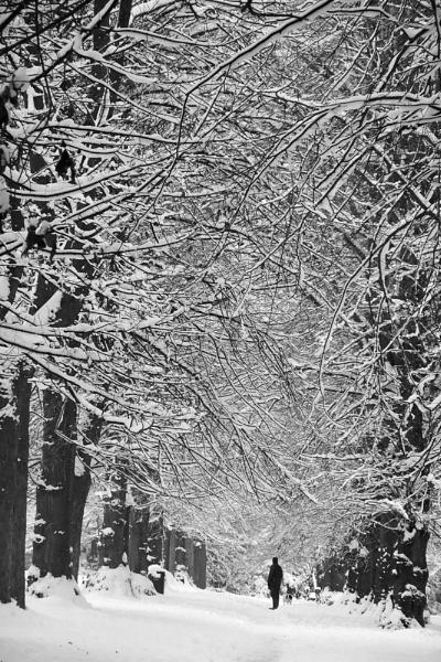 Winter Walk by VivienO