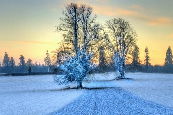 Snow field by Beladd