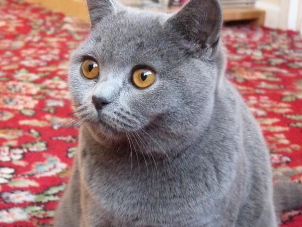 cute cat !!!!!!!!!!!!!!!!!!!!!!! by Gracehi12