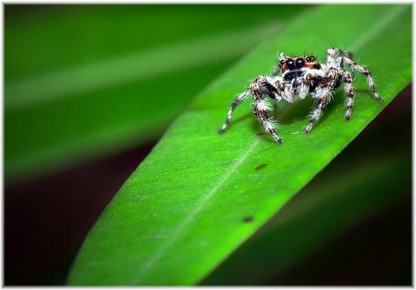 Spider by rajishravi