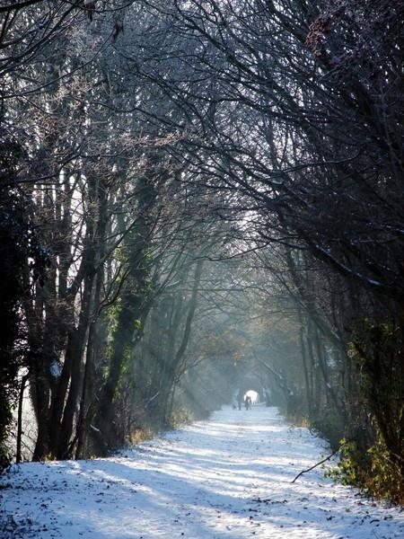 Frozen rail track by didunn1