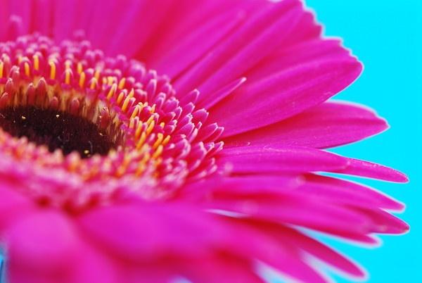 Flower by rachelkatherine