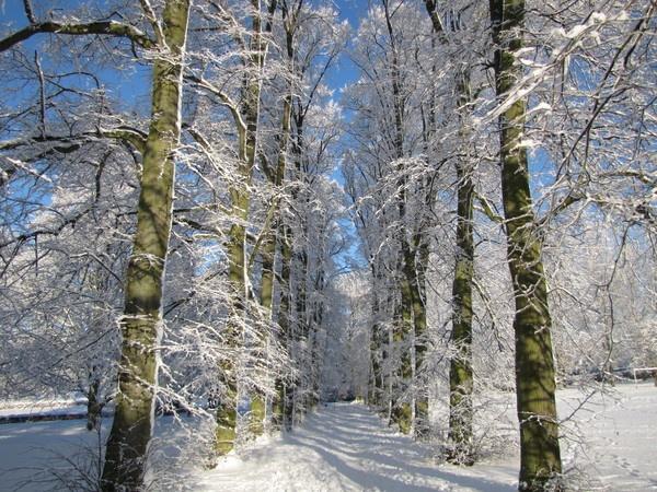 Barton Snow by Steve3671