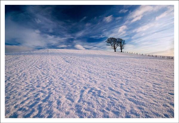 November Snow by TeresaH
