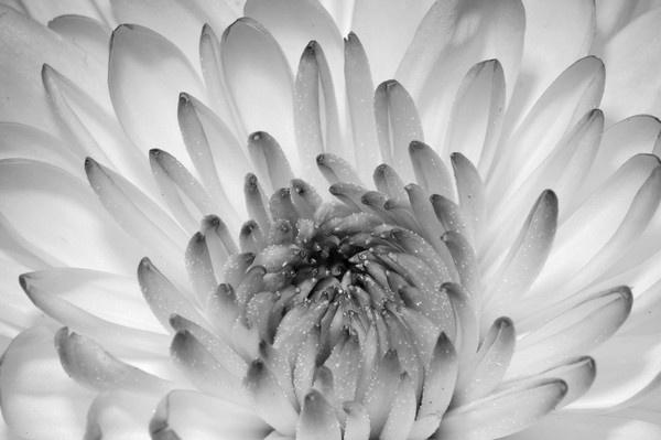 Flower1 by ShutterNutter
