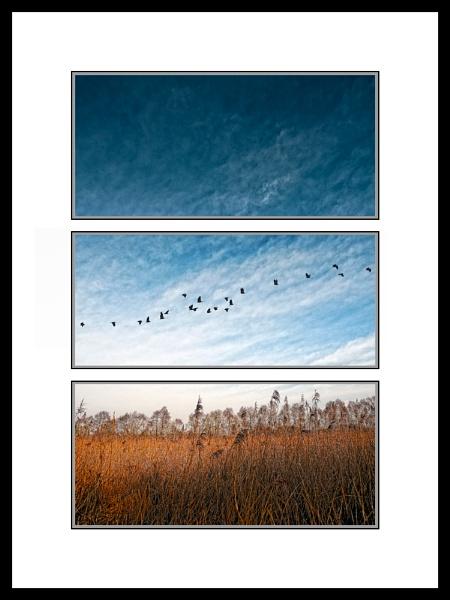 Sedgemoor Thirds by DiegoDesigns