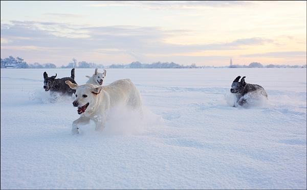 Snow Patrol by AlleyCatz