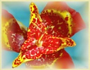 Mexican Shell Flower by 19Grumpah42