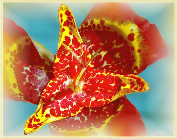 Mexican Shell Flower by 19Grumpah42