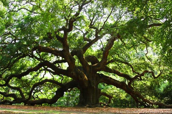 Angel Oak by Drippingsoul13