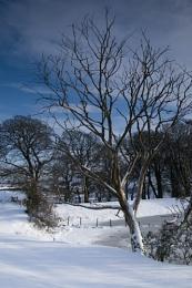 Glandeston Tree