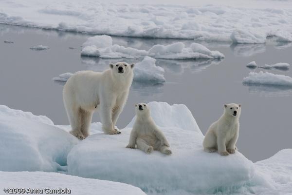 Three bears by ag71