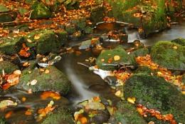 autumns golden stream
