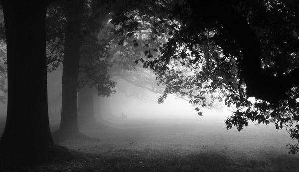 Misty Start by NippyN