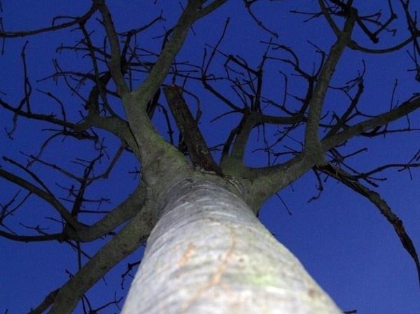 Wonders of a tree by kforeman