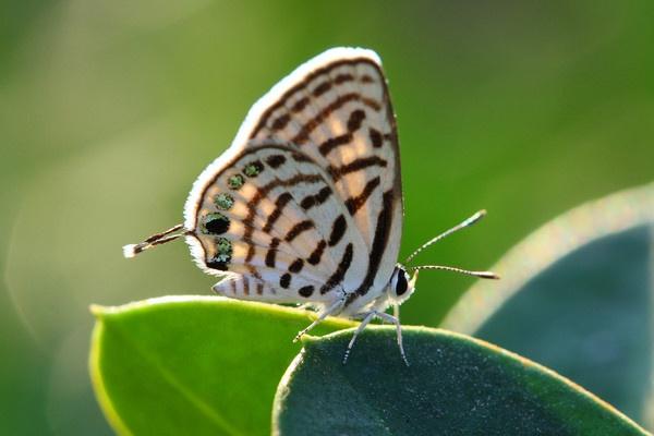 Butterfly by AneesKarakkad