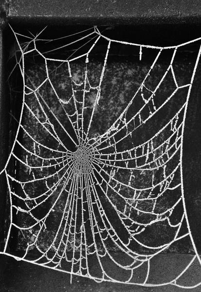 Winter web by bobbrooky