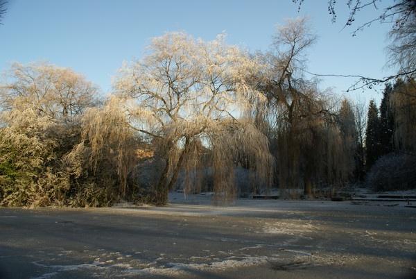 Winter sun by rayjac