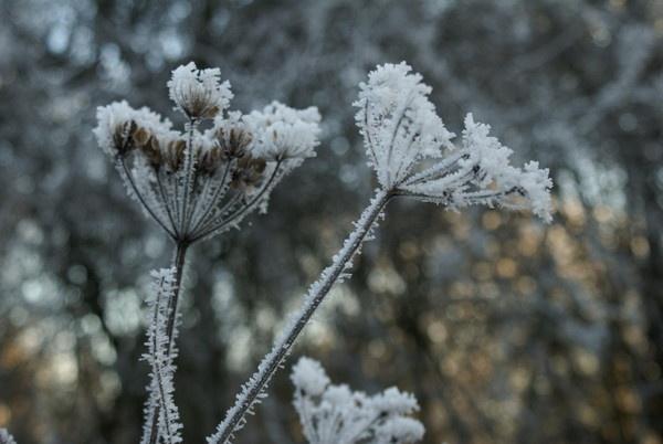 Frosty by rayjac