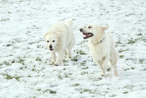 Stella & Tess in the snow by jasonrwl