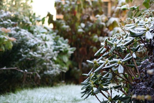 Deep frost in Saltash by coliniex